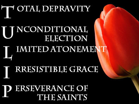 The Five Points of Calvinism are easily remembered by the acrostic TULIP (Credit: Reformation Church, a Non-Denominational Reformed Congregation in Boerne, Texas)