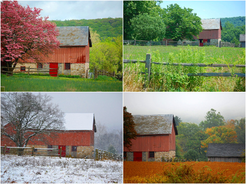 A montage of all fours seasons of an old barn across a field, taken from the same location in Buckingham, Pennsylvania. Clockwise from upper left: spring, May 4, 2011; summer, July 10, 2011; autumn, September 27, 2010; winter, November 27, 2012 (Credit: mtsofan via Flickr)